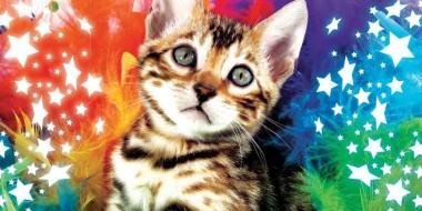 festa del gatto 2012