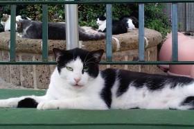 anche Smeraldo ha lasciato il rifugio lager Parrelli ed ora serenamente si gode la pace stravaccato sul divano presso Azalea